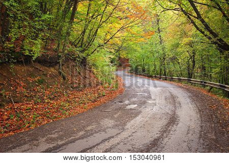 Road in colorful autumn forest. Composition of nature