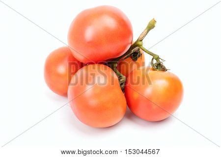 Five Tomato On A Branch