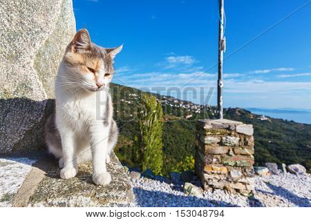 Cat and Pelion mountain and sea panorama behind