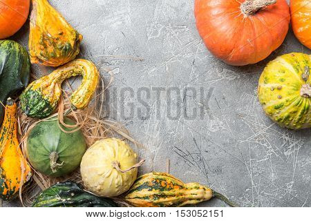 Autumn  frame from decorative Pumpkins over gray background, top view