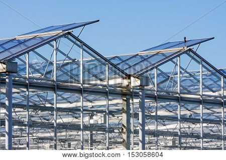 Greenhouse closeup in Westland in the Netherlands