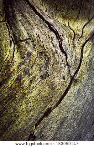 abstract background or texture detail of old wood crack