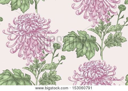 Flowers Pink chrysanthemum. Seamless pattern for a fabric paper wallpaper textile packaging drapes. Vector illustration. Vintage.