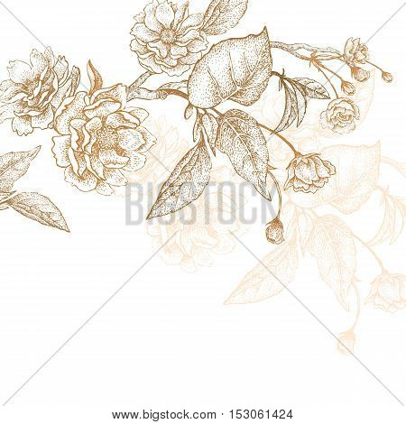 Holiday Luxury card for invitations, greetings. Hand drawing Chinese plum. The branches with leaves and flowers on a white background. Embroidery with golden threads. Vintage vector illustration.
