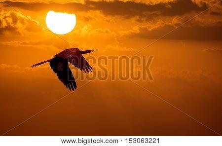 Bird over sunny autumn nature golden background