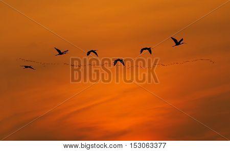 Flying birds over background landscape with orange sky