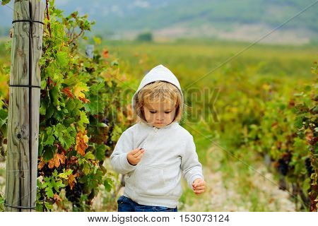 Cute baby boy child with curly blond curly hair in gray hoody and jeans with serious face on vineyards background