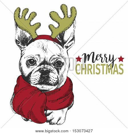 Vector portrait of Christmas dog. French bulldog dog wearing deer horn rim and scarf. for Christmas poster flyer greeting card holiday celebration party pet shop shelter pharmacy decoration.