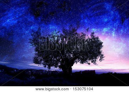 Night sky with tree . Mixed media