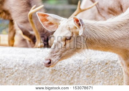 Cute crying deer  in evergreen forest with lovely look