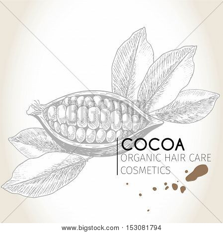 Vector set of hair care ingredients. Organic hand drawn elements. Cocoa bean. Use for cosmetic package shop store products spa salon wellnes program procedure skin hair care