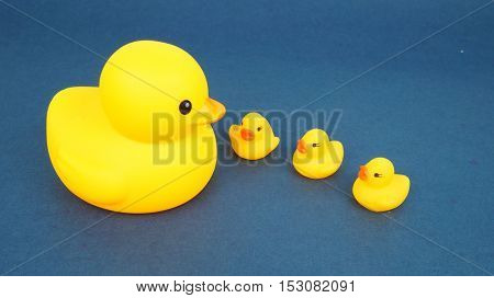 A family of duck