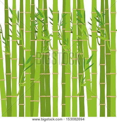 green bamboo trunks and leaves. exotic plant over white background. vector illustration