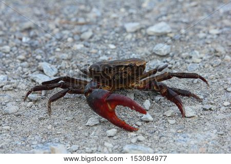Close-up  crab walking on the dirt road