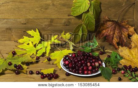 On a wooden surface is white saucer with cranberries surrounded by yellow autumn leaves. About saucers scattered berries.
