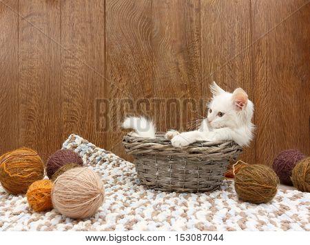White fluffy kitten sitting into a basket near balls of yarn in the interior