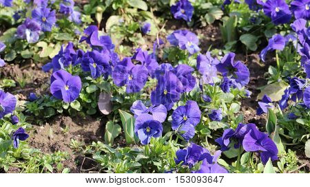 Violet flower available in high-resolution and several sizes to fit the needs of your project
