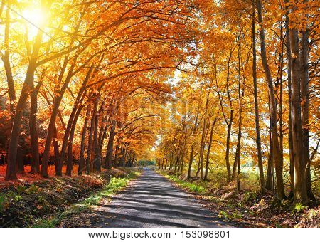 Way in colorful autumn forest.