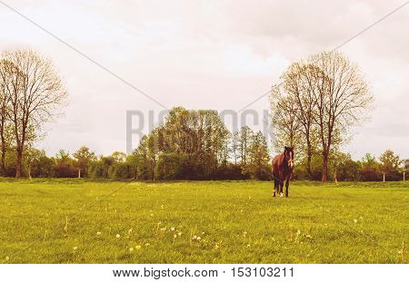 horse in a green field on a background of clouds.