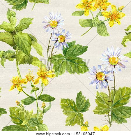 Herbs and flowers: chamomile, hypericum, mint. Herbal repeating pattern. Watercolor