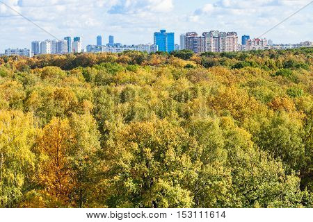 Trees In Forest And City On Horizon In Autumn Day