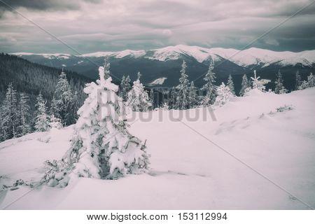 Fantastic winter landscape with snowy trees. Carpathians, Ukraine, Europe. Toned like Instagram filter