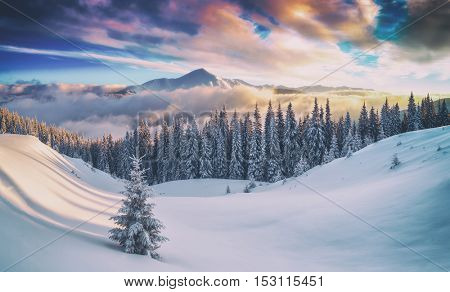 snovy trees on winter mountains, toned like Instagram filter