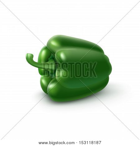 Vector Green Sweet Bulgarian Bell Pepper, Paprika Isolated on White Background