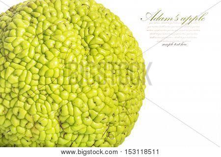 Adam's apple isolated on white background. maclura