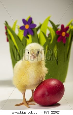 Small chicken standing next to an Easter egg with decorative flower basket in the background