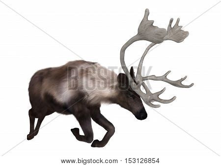 3D rendering of a caribou jumping isolated on white background
