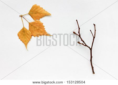 Fall season decor. Bare tree branch, golden dried leaves, white paper. Minimalistic autumn background.