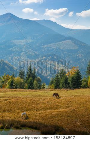 Autumn in the Carpathian mountains. Horses. Red mare with red foal and white stallion on the lake shore