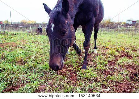 Big Horse Outdoors
