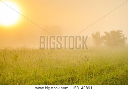on a green lawn in the early foggy morning . dew on the lush green grass a summer misty morning. the sun's rays fall on the wet grass and flowers. dew on the grass in a summer misty morning.