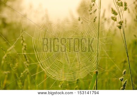 Wide Web plays in the wind. thick morning fog in the summer forest. thick morning fog in the forest at pond. Morning landscape in summer thick fog. dense fog in the morning.  early morning. forest hiding in the fog.