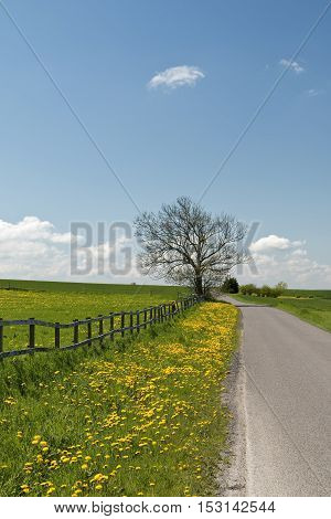 Country road with dandelions and a fence at spring