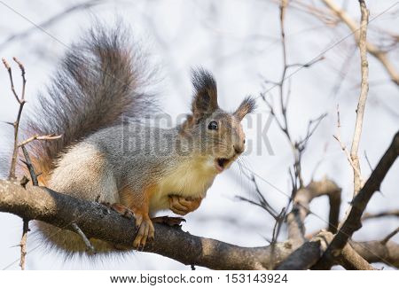 the photograph shows a squirrel on a tree