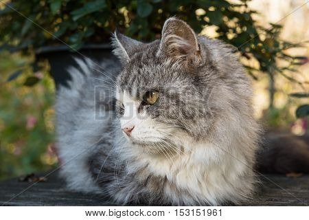 Curious cat looking at something outdoors on a summer day