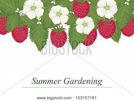 Vector illustration of ripe raspberries leaves and flowers. Card template with a sample text