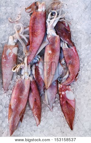Fresh Squids on a tray with ice at seafood market Greece