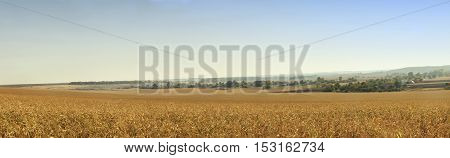 Landscape on a summer day at dawn
