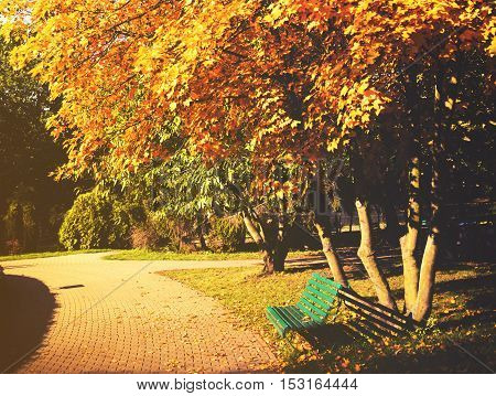 Beautiful Colorful Autumn Leaves In The Park.