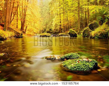 Boulders With Fallen Leaves. Autumn Mountain River. Beeches, Maples And Birches Leaves.