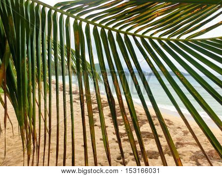The Caribbean tropical beach. View through the branches of a palm tree