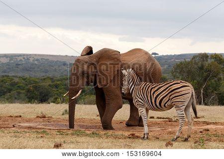 Elephant Enjoying His Water
