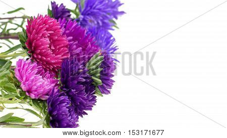 flower aster isolated on white background .