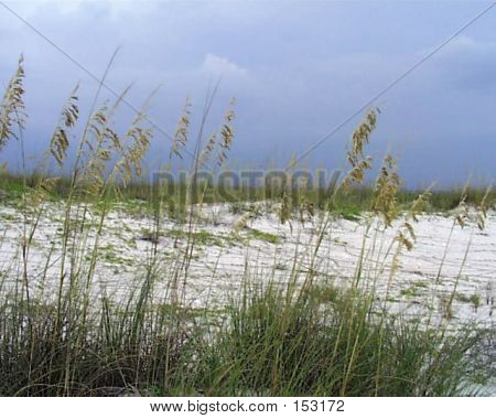 Picture or Photo of Beach with sea oats