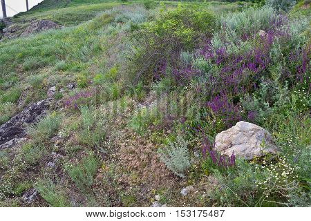 Summer green meadow with flowers and large stones
