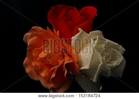 Three different colored roses in glass on black background